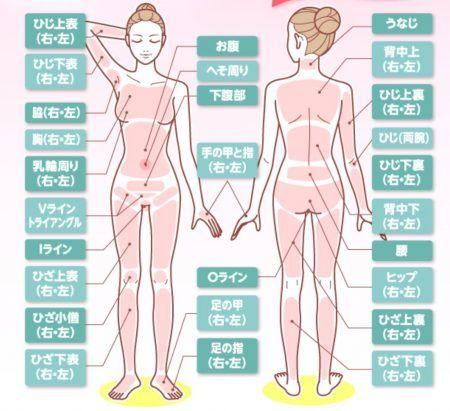 46部位(うなじ、背中下(左右)、ひじ両うで、(左右)ヒップ、(左右)、ひじ上表(左右)、ひじ下表(左右)、乳輪周り(左右)、胸(左右)、わき(左右)、お腹へそ周り、下腹部、手の甲と指(左右)、ひざ上表(左右)、ひざ小僧(左右)、ひざ下表(左右)、足の甲(左右)、デリケートゾーン、Vライン、トライアングル、Iライン、Oライン)